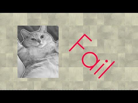 Top 5 cat fails