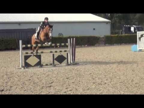 7 yr old EQ horse