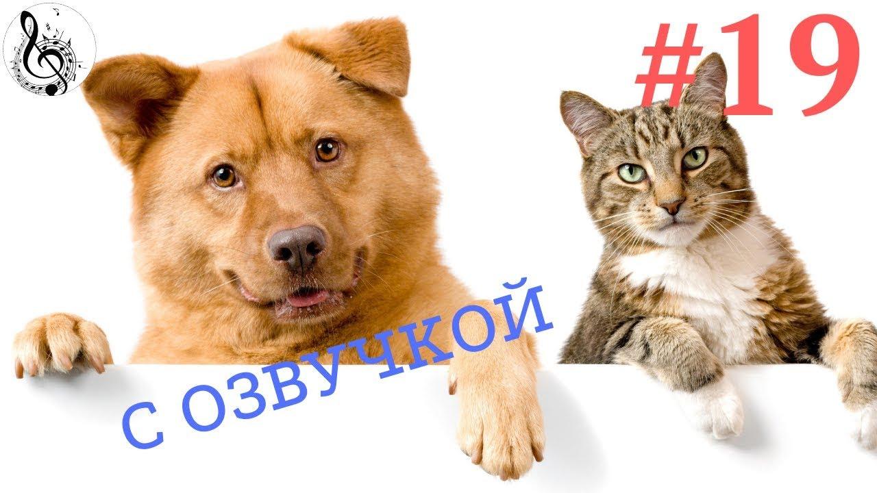 Смешные  животные 2017 Приколы про животных ТОПовая ПОДБОРКА # 19 Приколы с котами и собаками.