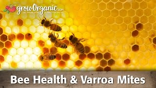Bee Health & Varroa Mites