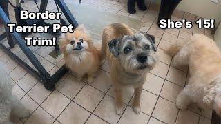 Border Terrier Pet Trim | 15 Yrs Old!