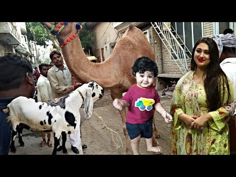 শাকিবের সাথে পাল্লা দিয়ে ছেলে জয়ের জন্য অপু বিশ্বাস এবার একি কোরবানি দিচ্ছেন দেখলে মাথা ঘুরে যাবে thumbnail
