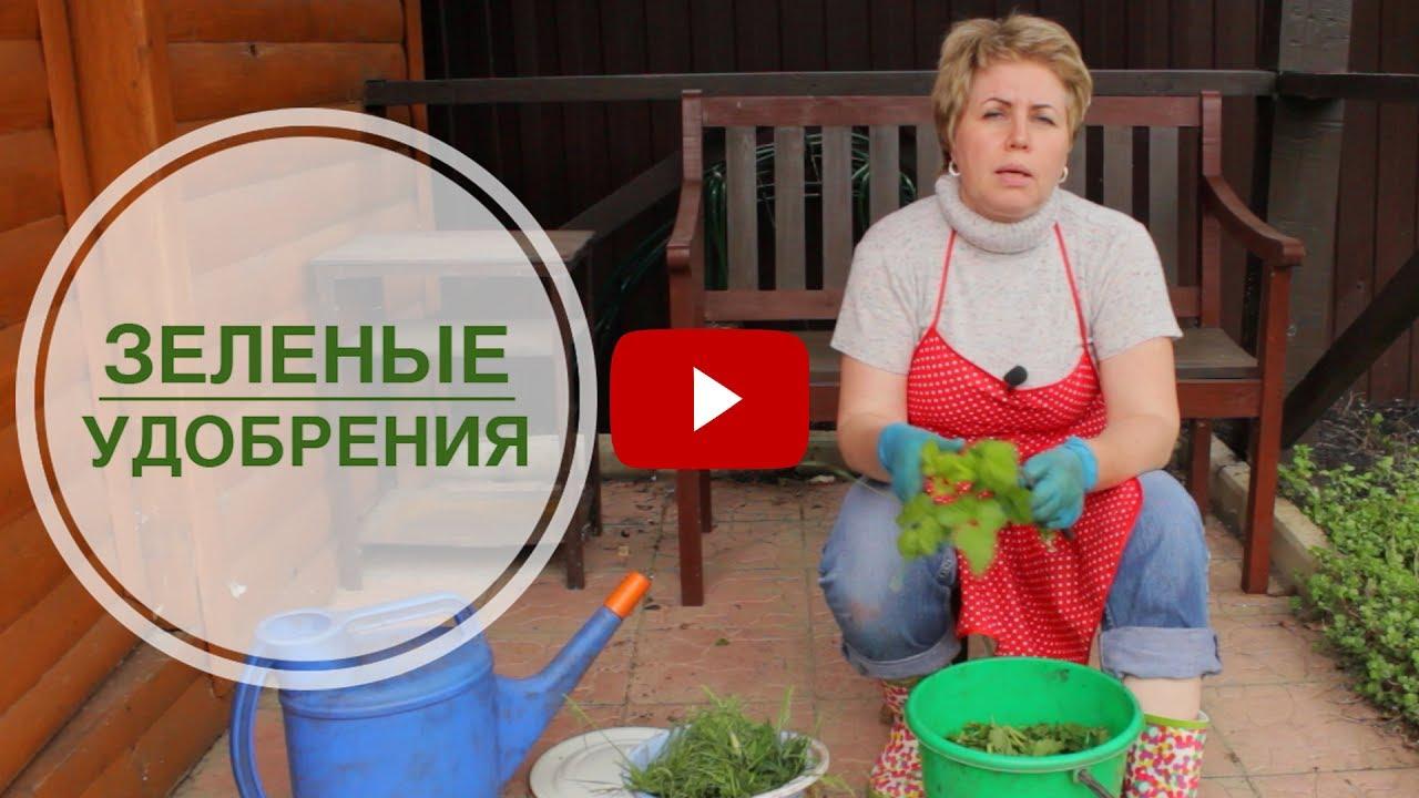 Как сделать зеленые удобрения