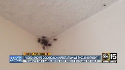 Video shows cockroach infestation at Phoenix apartment