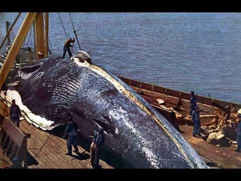 El Animal Mas Grande Del Mundo - YouTube World Largest Animal Ever Recorded