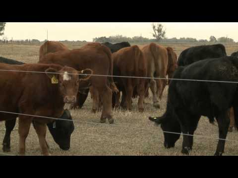 Cow Leasing - Market Journal - December 14, 2012