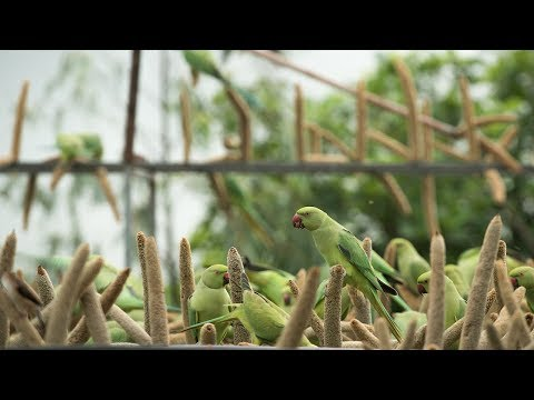 "The ""Birdman"" Of Gujarat Feeds Thousands Of Birds Every Day"