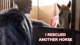 I RESCUED ANOTHER HORSE IN REALLY BAD CONDITION...