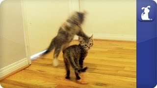 Action Kitties - Behind the Scenes - The Litter