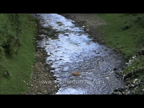 Lohawati river of Lohaghat Travel Video