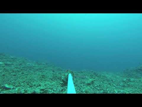 Gili Shark Conservation Best of the BRUV 2016