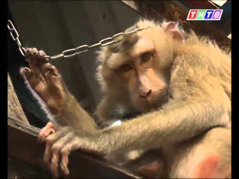 Vài nét về con khỉ năm Bính Thân - Võ Phúc Châu phát biểu