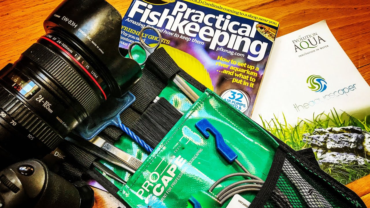 How I became a professional aquascaper... - YouTube
