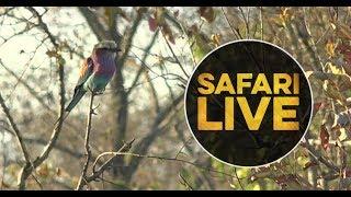 safariLIVE - Sunset Safari - July 11, 2018