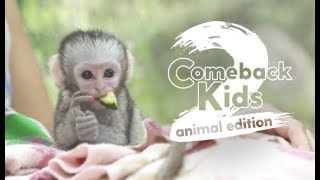 Comeback Kids: Animal Edition Season 2 Trailer | The Dodo