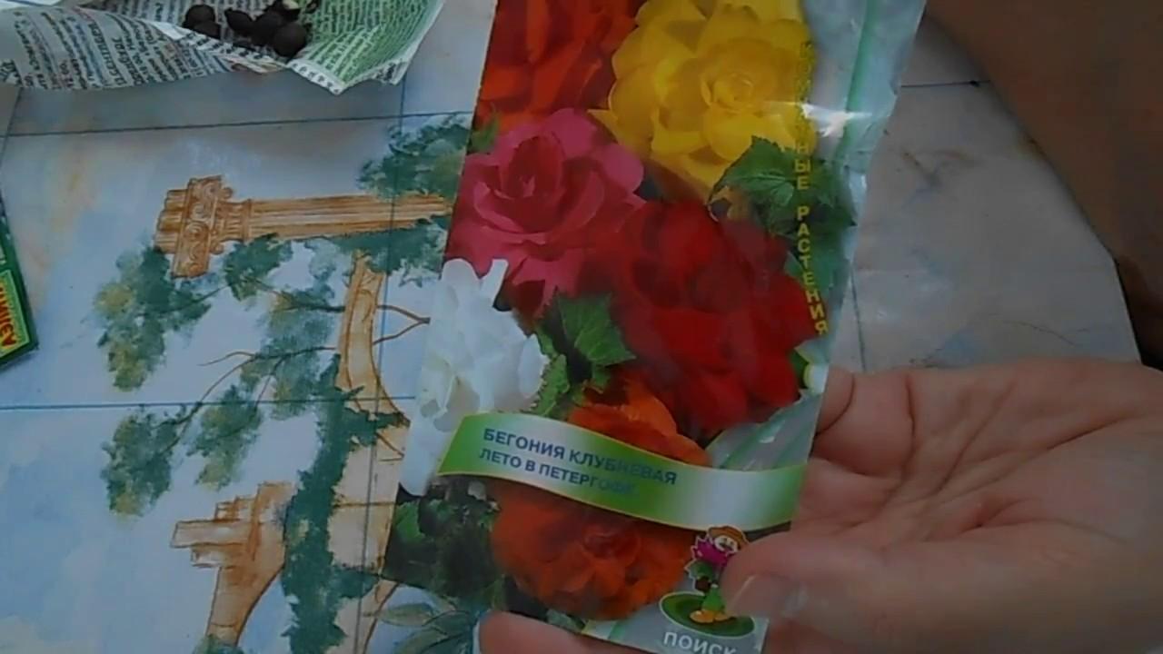 Новые семена комнатных цветов