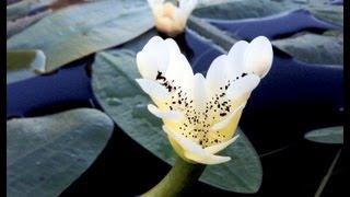 water-hawthorne-in-spring
