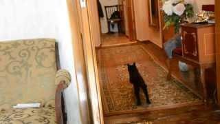 Уникальная кошка