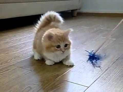 Image of: Johnartist12 Funny Videos 2014 Funny Cats Video Funny Cat Videos Ever Funny Animals Funny Fails 2014 Youtube Funny Videos 2014 Funny Cats Video Funny Cat Videos Ever Funny