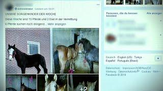 Abzocke mit Pferderettung | Panorama 3 | NDR