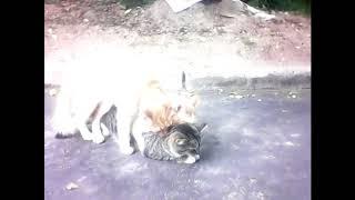 Коты дружат! Дружба котов!
