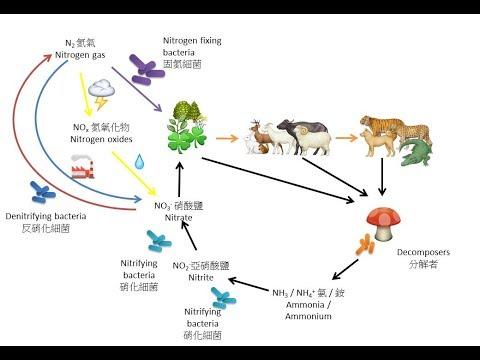 DSE Bio 氮循環 Nitrogen cycle-Ecology 生態學 9