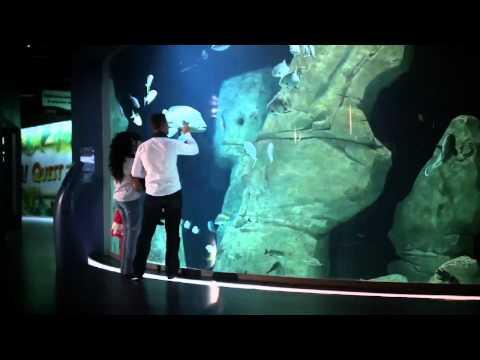 Aquarium Istanbul Video