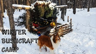 Winter Bushcraft Camp with my Dog - Building a Lean-To