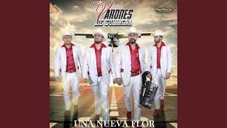 Download lagu Armando la Estructura