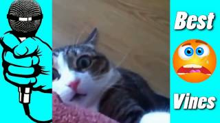 Funny Vines  How strange guy snoring in his sleep and the cat eats with fork   Best Camedy # 6