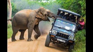 Животные против автомобилей Носорог слон бегемот бык против машин