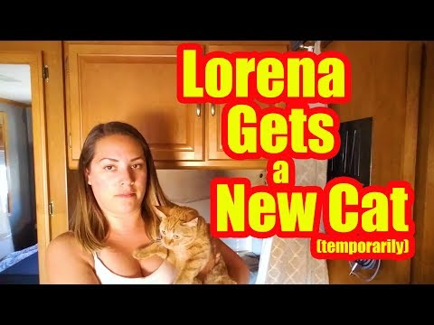 Motorhome RV Living | What's Up With The New Cat, Our Friends Bought An RV