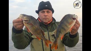 Надерли ЖИРНИХ окунів. Відмінна риболовля, окуні. озеро Ільмень 2018.