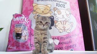 Котик Егор и угольный наполнитель для туалета Molly Coddle