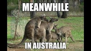 AUSSIE ANIMAL MEME COMPILATION