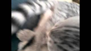 #утро котенка