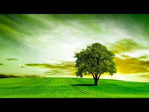Beautiful Meditation  for Stress Relief • Relaxing  Healing  Ambient Study