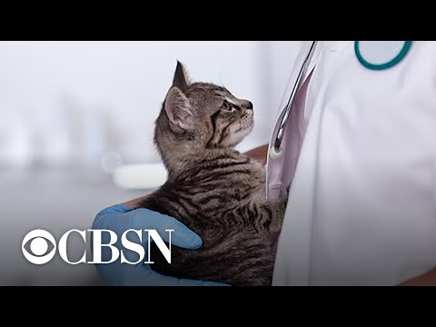 Concern about veterinarians'