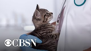 Concern about veterinarians' rising suicide rates