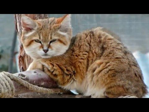 Top 10 Most Beautiful Cat Breeds