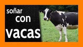 Soñar con Vacas 🐄 Buscando ***Estabilidad*** 🐮