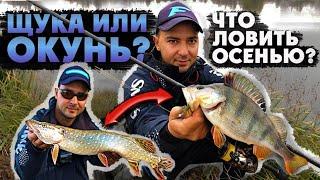Ловить ЩУКУ или ОКУНЯ Какую тактику выбрать этой осенью Рыбалка 2020