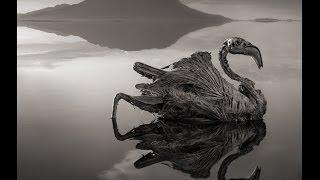 Natrón | El lago que petrifica a los animales.