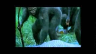 Homo habilis: las primeras herramientas.