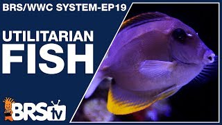 Ep19: Reef tank fish with a purpose! - The BRS/WWC System
