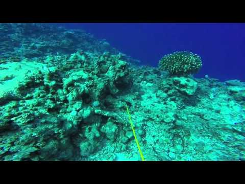 spearfishing Majuro, Marshall Islands