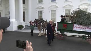 Download President Trump and the First Lady Participate in the White House Christmas Tree Delivery Mp3 and Videos