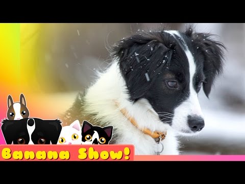 After the Snow Storm  | Banana the Talking Dog Show Ep: 09
