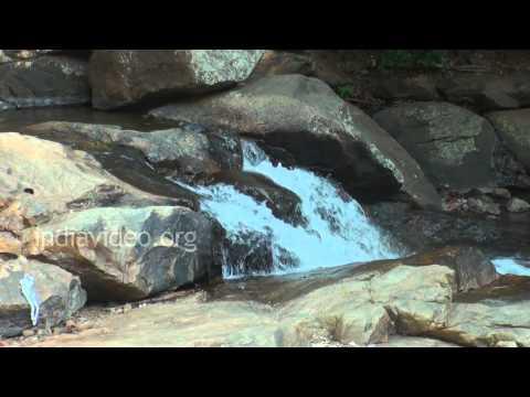 Monkey Falls, Coimbatore