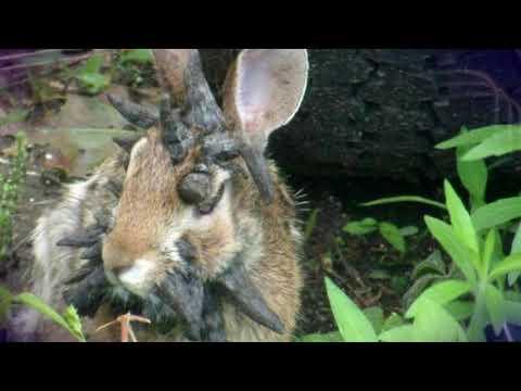 Он заметил в своем дворике одного кролика, вид которого способен вселить ужас в любого #mosshow